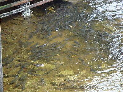 Curise - Tuesday - Ketchikan 013web
