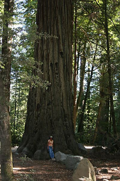 Redwood Natl Park - Wednesday 005web