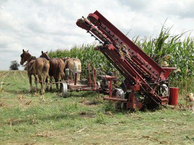 Web Amish 02 037 (800x600)
