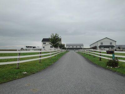 Web Amish 03 029 (800x600)