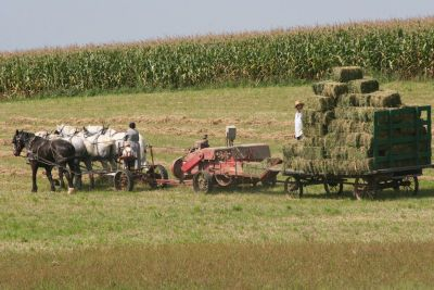 This time of year is a great time to visit, as our Amish neighbors are out harvesting in the fields.