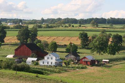 2010-07-25 - Amish 063 web