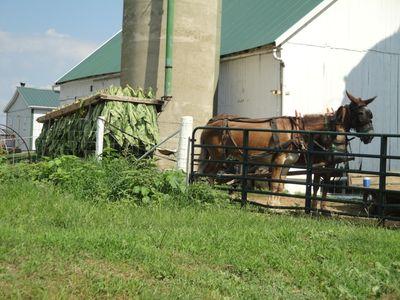 2010-07-30 - Pa Amish 004 web