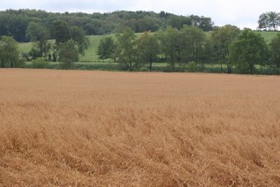 2010-07-25 - Amish 031 web