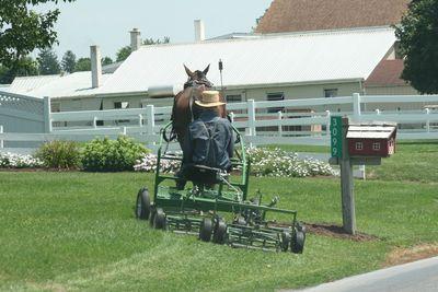 2010-07-30 - Pa Amish 2 073 web