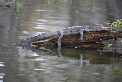 2010-11-23 - Swamp Tour 079 web