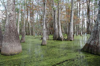 2010-11-23 - Swamp Tour 197 web
