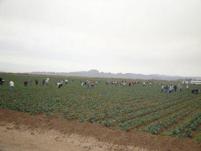 2011-02-18 - Yuma 6 002 web