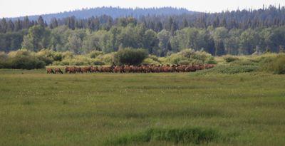 2011-07-09 - Teton1 034 web