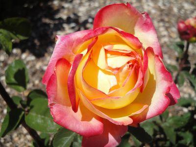 2011-05-03 - ABQ Garden - Aquarium 179 web