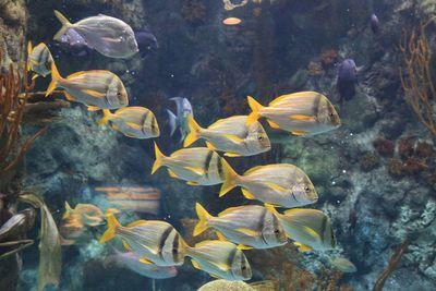 2011-05-03 - ABQ Garden - Aquarium 087 web