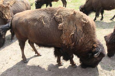 2011-07-02 - Cheyenne 2 030 web