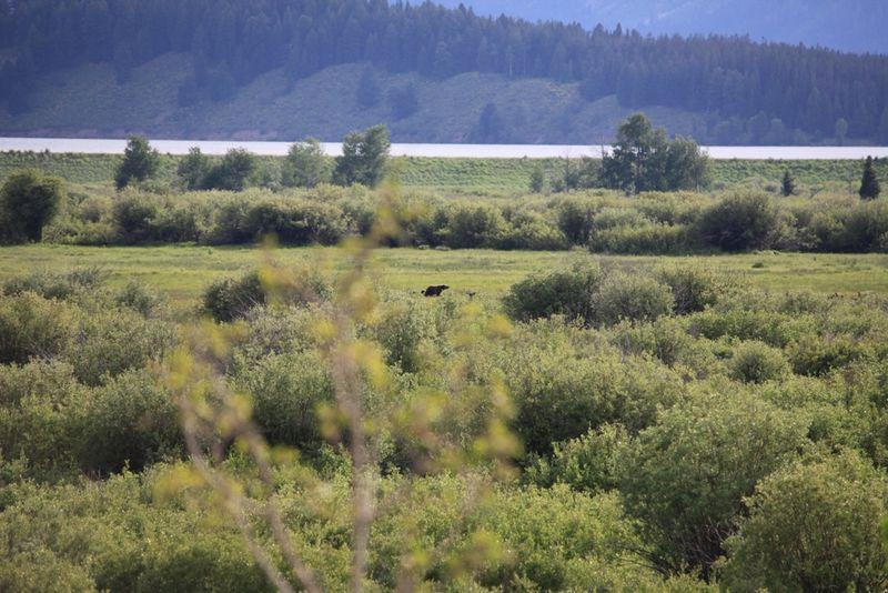 2011-07-09 - Teton1 041 web