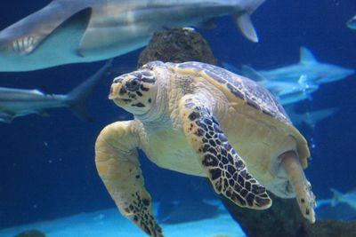 2011-05-03 - ABQ Garden - Aquarium 123 web