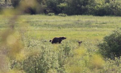2011-07-09 - Grizzley 02