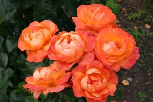 Queen_elizabeth_gardens_077web
